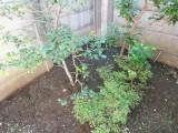 庭に物置を設置して家の中をスッキリ片付け