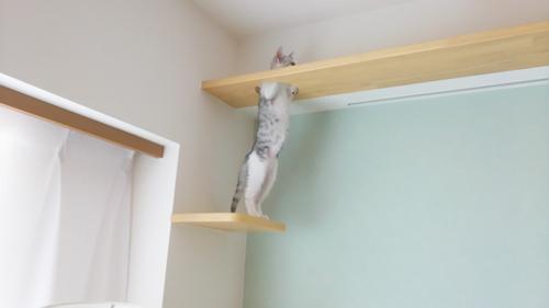 ご家族とネコちゃんみんな楽しい!キャットウォークのある家